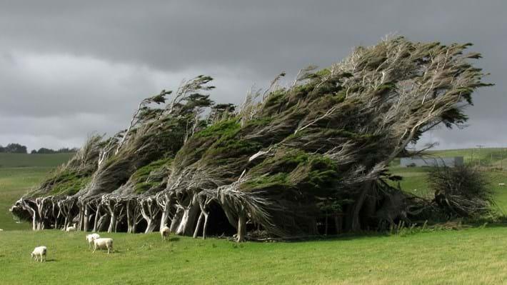 slope-point-trees-sheep_2016_10_31.jpg