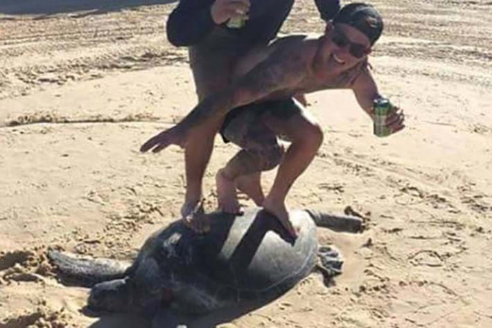 Bros who 'surfed' on a sea turtle face major fines – and look like idiots