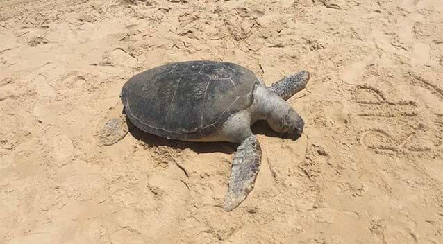 turtle-2-2016-11-3.jpg