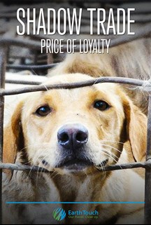Shadow Trade – The Price of Loyalty