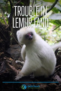 Trouble in Lemur Land