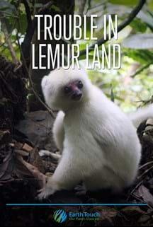 Trouble in Lemur Land