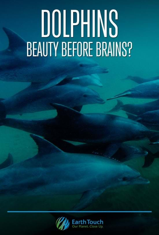 DOLPHINS: Beauty Before Brains?