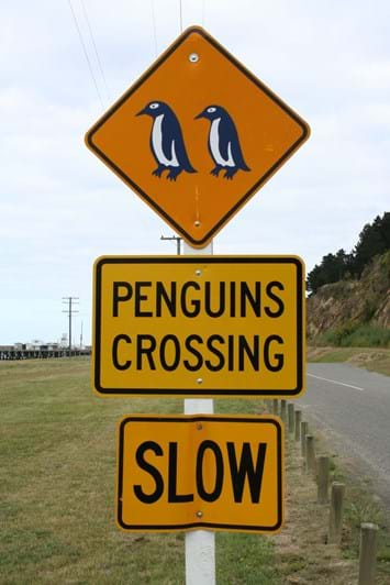 penguins-crossing_2016_11_15.jpg