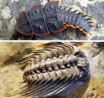 trilobites_beetle_comp_2016_11_21.jpg