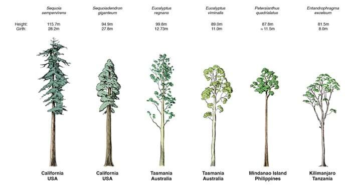 Tallest_Trees_2016_11_30.jpg