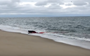 Watch: Great white shark hunts grey seal in the shallows