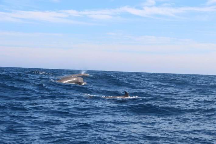 bottlenose-whales_2016_12_02.jpg