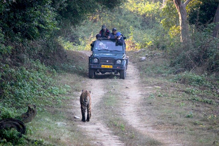 tiger_chases_jeep_1_2016-12-05.jpg