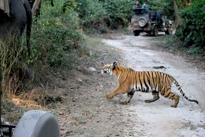 tiger_attacks_elephant_3_2016-12-05.jpg