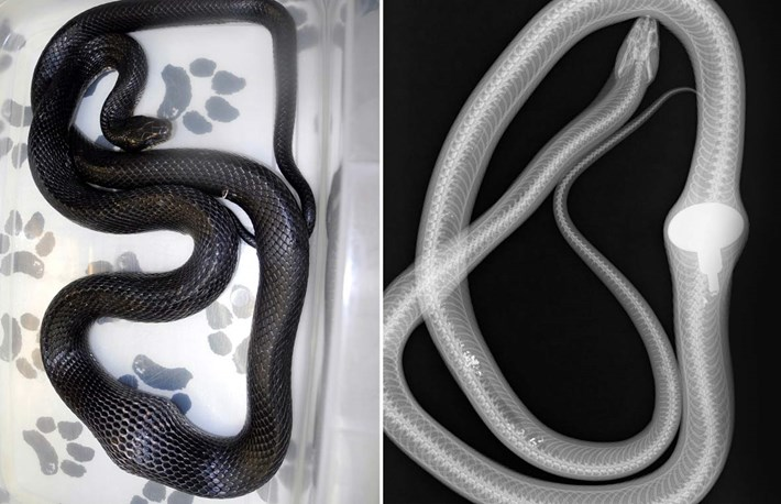 snake-comp-2016-12-6.jpg