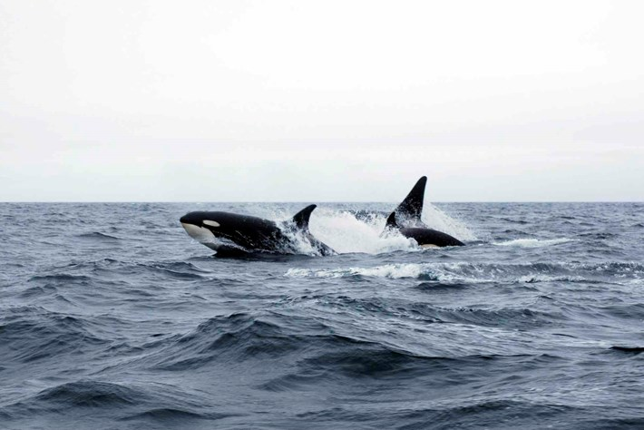 orcas-page-2016-12-6.jpg