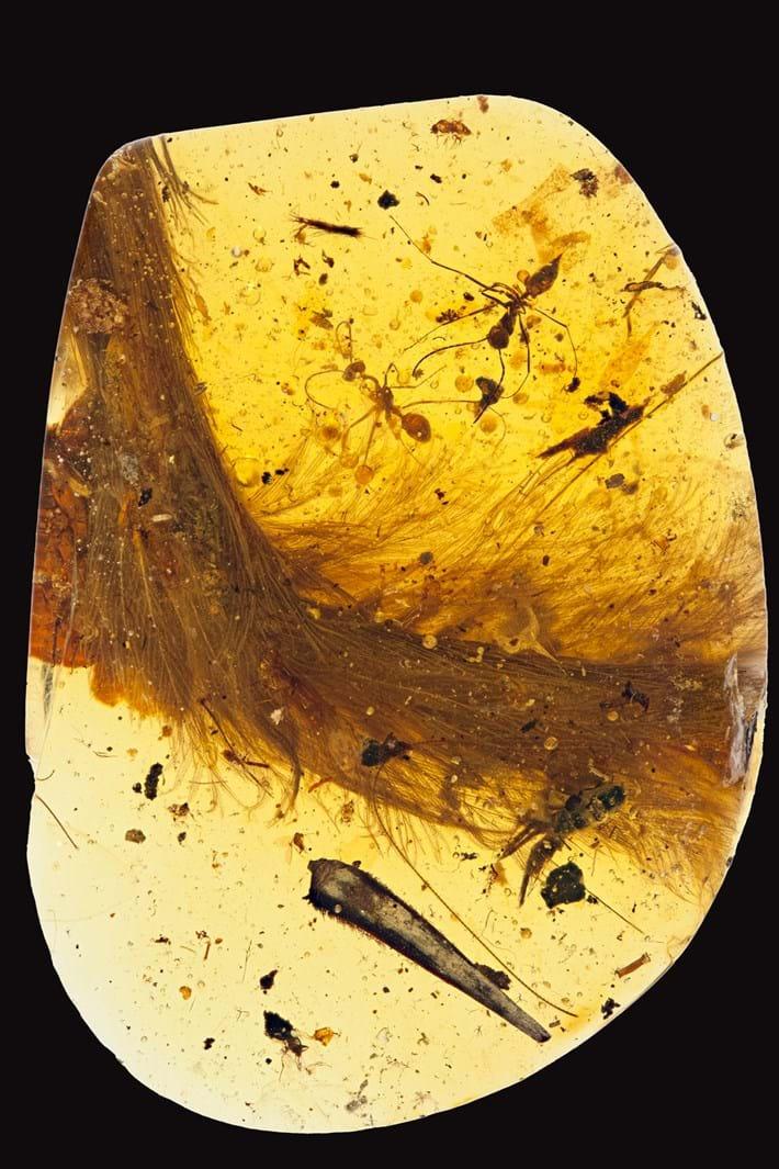 fossil_amber_specimen_2016_12_08.jpg