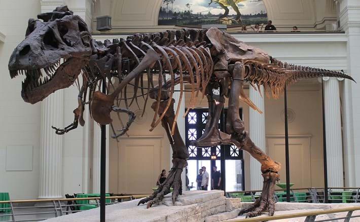 Sue T_rex skeleton_2016_12_14.jpg