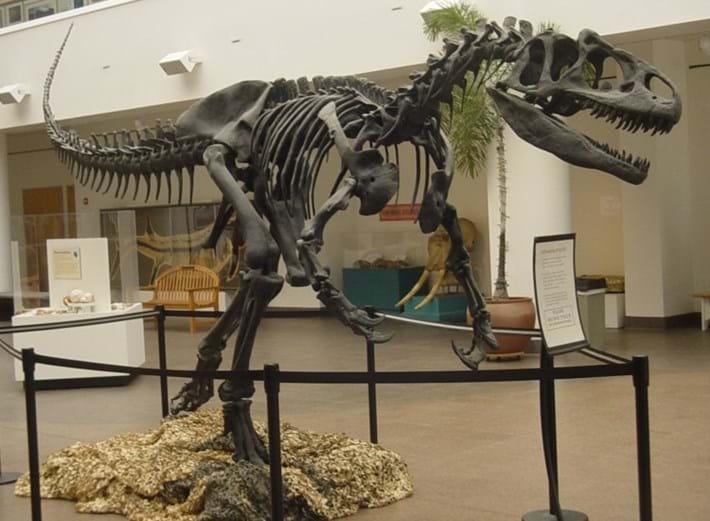 Allosaurus_SDNHM_2016_12_14.jpg