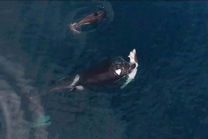 orcashark-page-2016-12-9.jpg