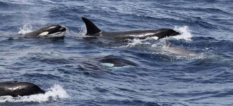 whales-1-2016-12-18.jpg