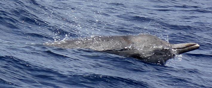 orcas-beaked-2016-12-18.jpg