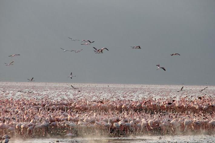 lake bogoria flamingo_2017_01_09.jpg
