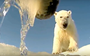 Polar bear POV: A predator's-eye-view of Arctic life