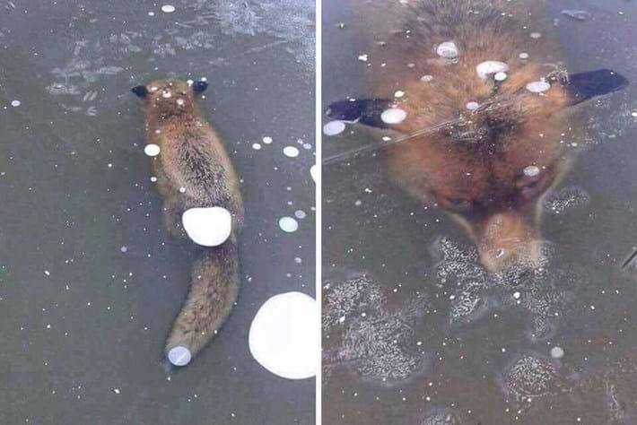 fox-2-2017-1-12.jpg