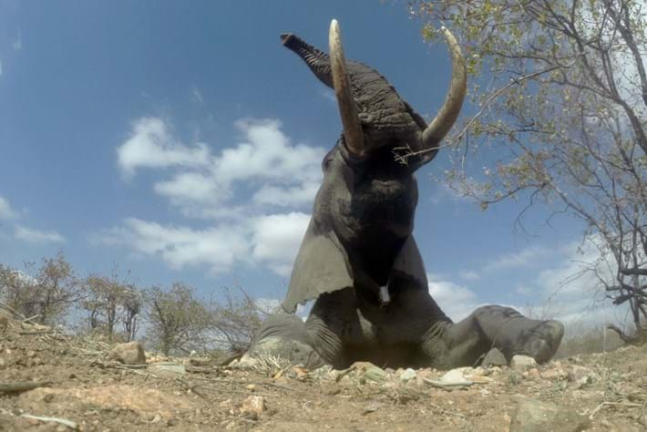 On the road with the Elephant Ignite Expedition: Collaring Africa's giants