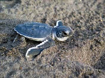 baby-turtle-crab-1-2017-01-17.jpg