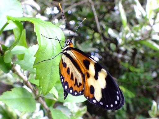 butterfly-2017-1-18.jpg