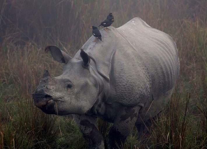 one-horned_rhino_2017-02-13.jpg