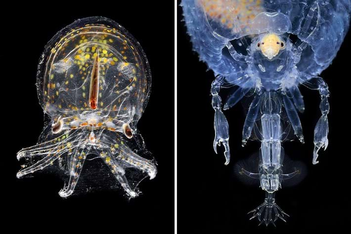 glass octopus_pram bug_2017_02_14.jpg
