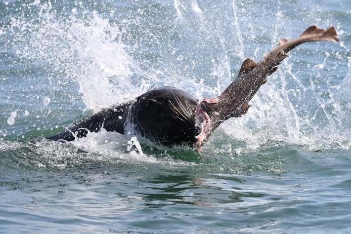 sealshark-3-2017-2-15.jpg