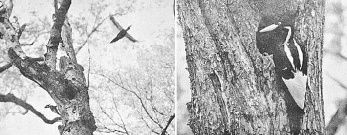 woodpecker-compo_2017_02_17.jpg