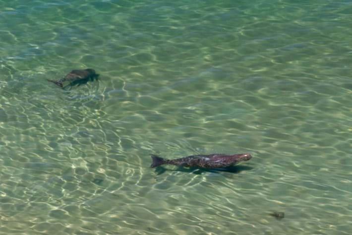mermaids-dugong-2017-2-22.jpg