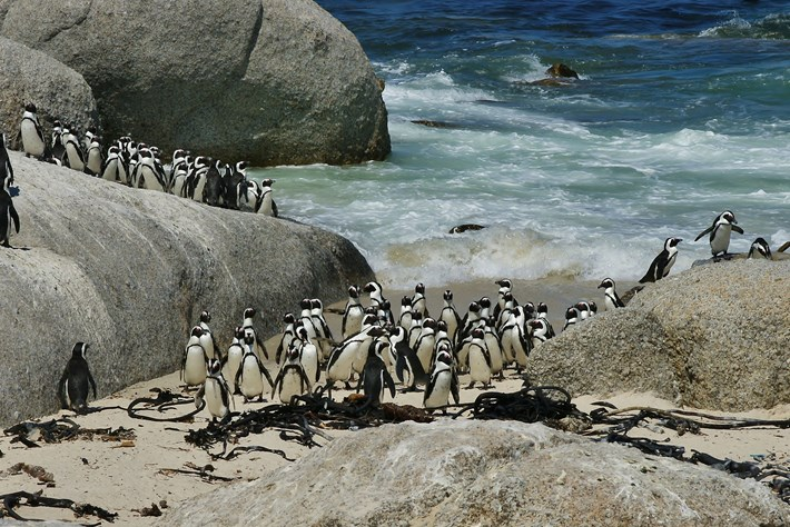 african-penguin-colony_2017_02_24.jpg