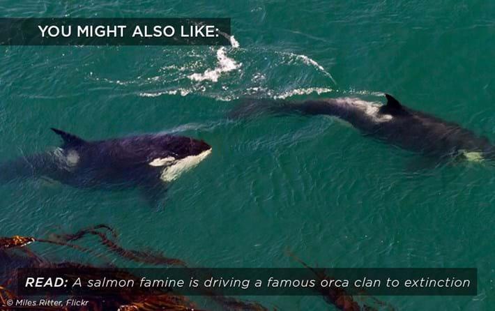 orca famine related_2017_03_01.jpg