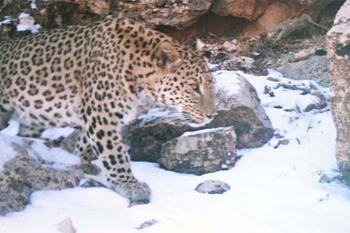 leopard-iraq_2017_03_03.jpg