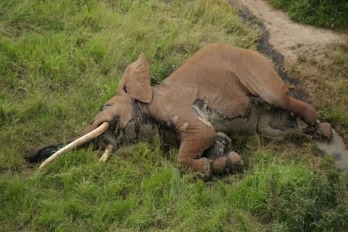 'Big tusker' elephant known as Satao 2 killed in Kenya