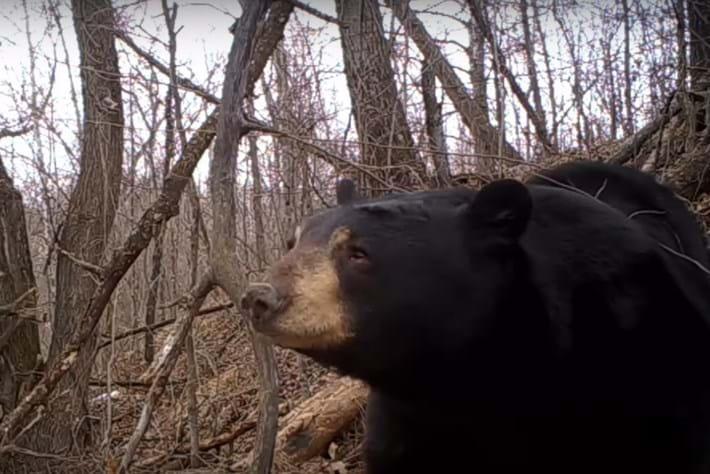 Black-bear-emerges-from-den_2017-03-06.jpg