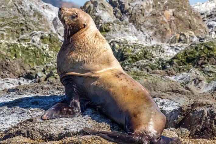 sea-lion-thumb_2017_03_14.jpg