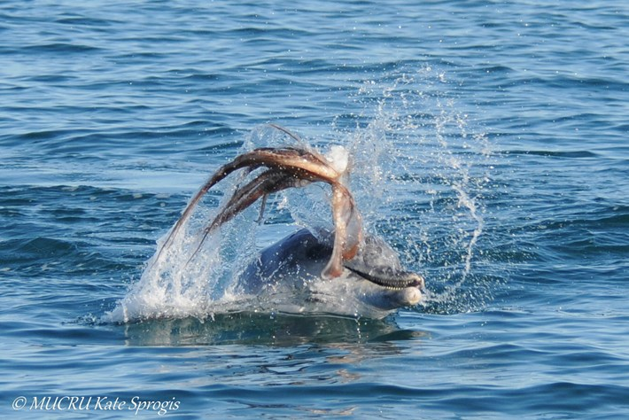 dolphin octo1_2017_04_03.jpg