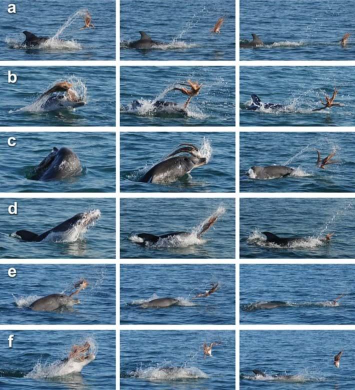 dolphin octo_comp_2017_04_03.jpg