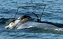Rescue teams in California need help tracking down this entangled whale