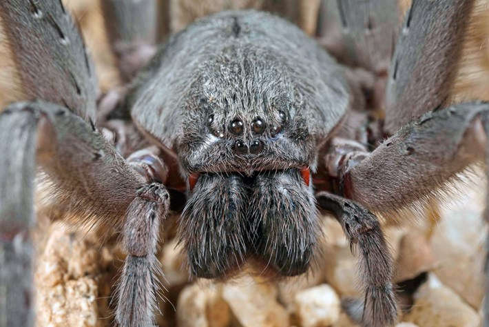 spider-thumb_2017_04_17.jpg