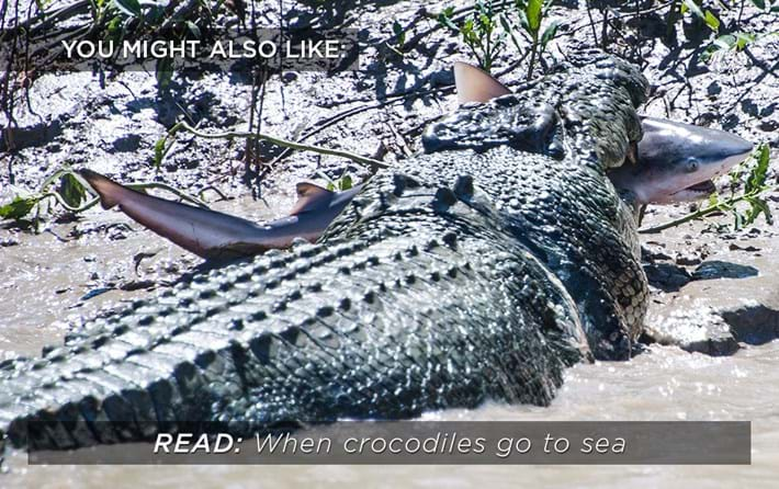 sea-crocs_related_18_04_17.jpg