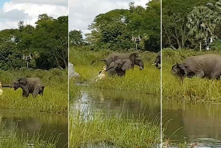 elephants-page-2017-4-18.jpg