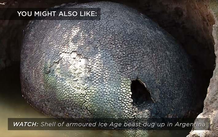 armoured-shall_related_19_04_17.jpg