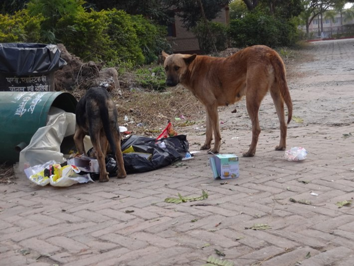street dogs_india_2017_05_02.jpg