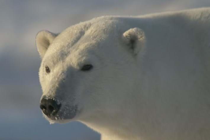 Polar Bear Town - Ep 1
