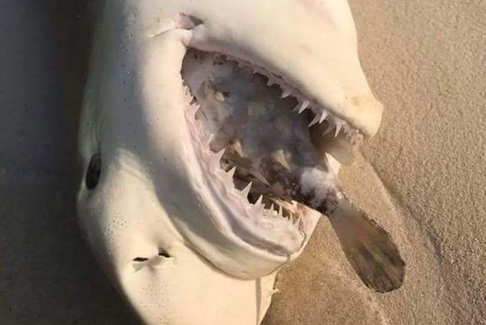 shark-page-2017-5-12.jpg