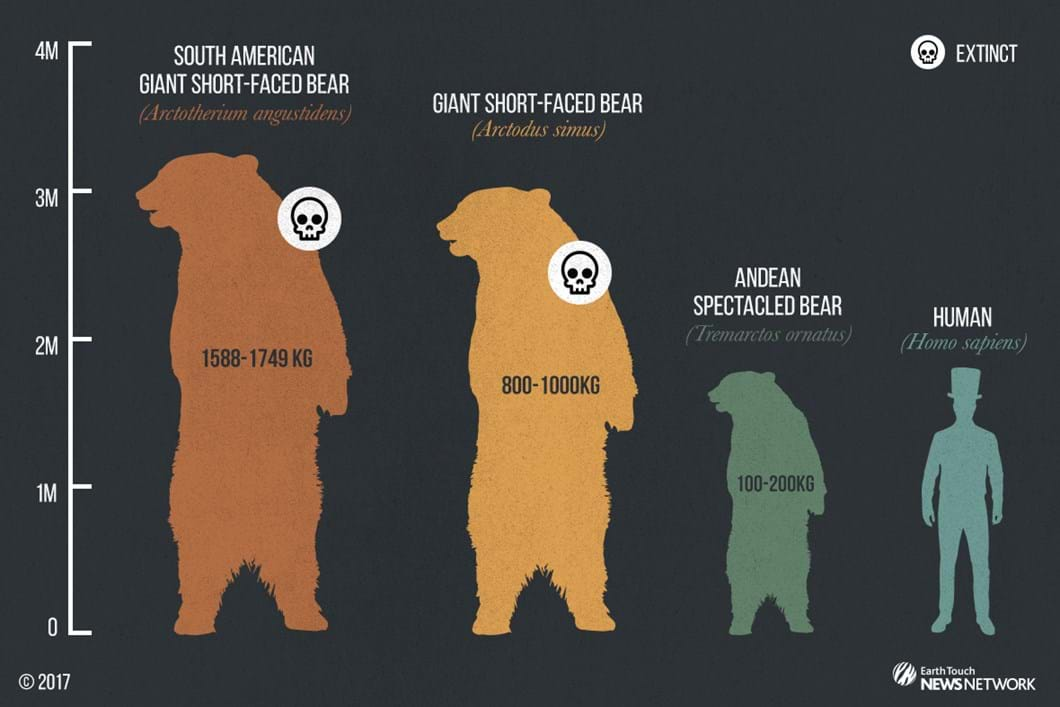 Short-faced-bear_Size-Graphic_2017_05_23.jpg